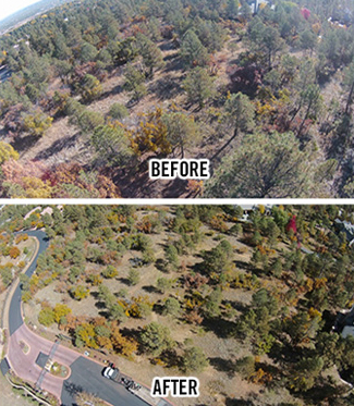 Fire-Mitigation-Before-After